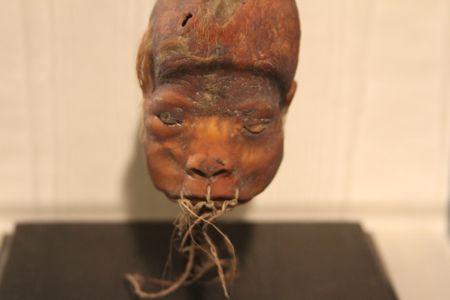Shrunken Head, the Lightner Museum, Saint Augustine, Florida