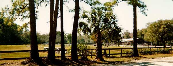 The Charleston Equestrian Community Gocharleston